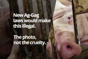 New-Ag-Gag-Laws-Make-This-Illegal-690x460